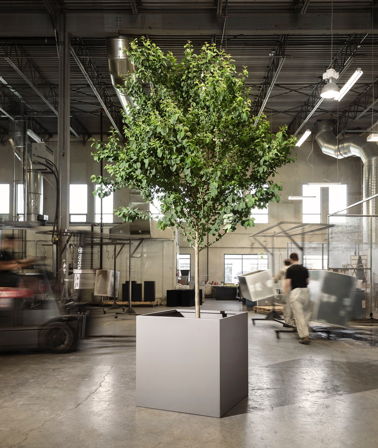 Young tree in modern rectangular planter in industrial space.